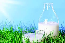 milk source of calcium